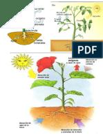 La Planta - Fotosintesis