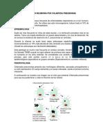 Resumen de Neumonia Por Chlamydia Pneumoniae