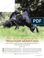 The Lost Morgans of the Tehachapi Mountains