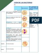 Clasificación de Las Bacterias Archivo Completo