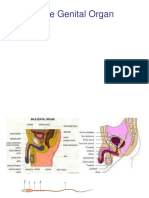 Male Genetal Organ.ppt