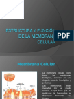5 Membrana Celular y Transporte