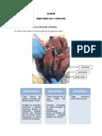 taller diseccion anatomica