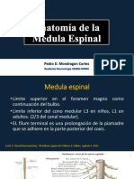 Anatomia y Vias Medula