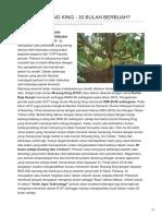 Durian Musang King - 30 Bulan Berbuah