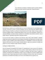 La Desforestación