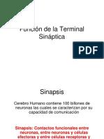 Función de La Terminal Sináptica