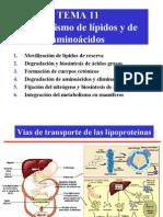 Tema11 Metabolismo de Lipidos