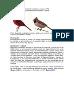 Cardinaliscard_DS003.pdf