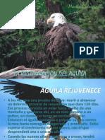 El Aguila Renovada.