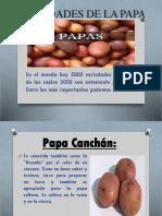 Variedades de La Papa Diapositivas