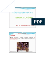 Espermatogênese  2011.pdf
