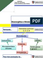 Bioenergética e Metabolismo