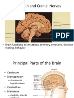 3. Brain and cranial nerves.ppt