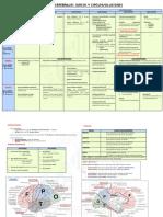 4. Surcos y Circunvoluciones.pdf