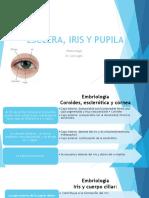 Esclera, Iris y Pupila PAO
