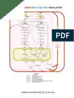 Gluconeogenesis & Glycolysis-Regulation
