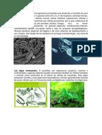 Bacterias Algas y Hongos