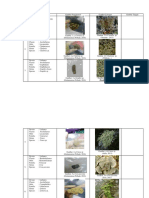 Klasifikasi Lichen