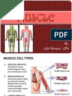 05. Muscle Lilikh