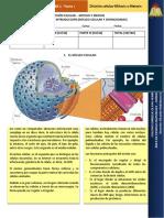 tallerncleocelular-140627083556-phpapp01