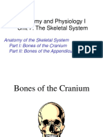 Anatomy Unit 7 - Anatomy of the Skeletal System.ppt