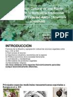 Apropiación Cultural de Una Planta Europea en La Herbolaria Tradicional Mexicana_ El Caso Del Ajenjo (Artemisia Absintium)