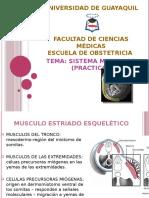 272575308 Sistema Muscular Embriologia