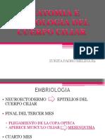 5.4 Anatomía e Histología de Cuerpo Ciliar