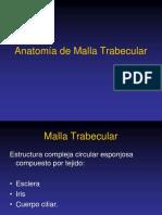 Anatomía de Malla Trabecular