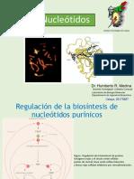 5Dexoribonucleótidosyregulación20170222
