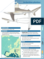 Sandbar Shark St Id Guide