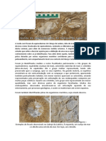 Texto de Visitação de Equinodermes Para PNSAC[1]