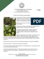 PlantasdeHojasComestibles.pdf