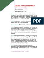 MONOGRAFIA DEL CULTIVO RUTH.docx
