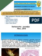 diapositiva-sistemas-de-crianza-hematologica.pptx
