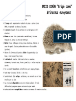 ERIZO.pdf