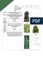 Quercus Humilis o Pubescens