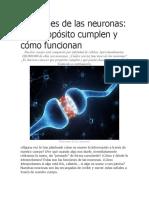 Funciones de Las Neuronas
