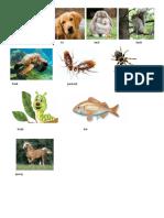 Animales en Poqomchi