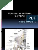 102356511-Nervios-Del-Miembro-Inferior-Presentacion.pptx
