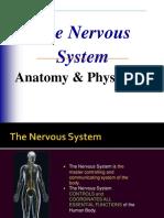 Final Nervoussystem