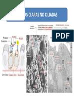 CELULAS CLARAS