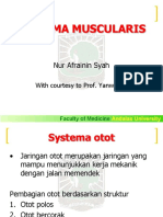 Systema Muscularis - Blok 6