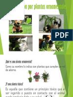 Intoxicación Por Plantas Ornamentales_ Rocio Belén