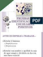 7-cocos-gram-positivo.pdf