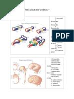 Sua Vesiculas Embrionarias II.pdf
