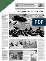Illescas en peligro de extinción