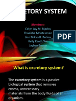 Excretory System New