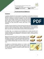Informe Terreno Lab (2)